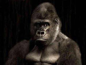 L'animal totem Gorille
