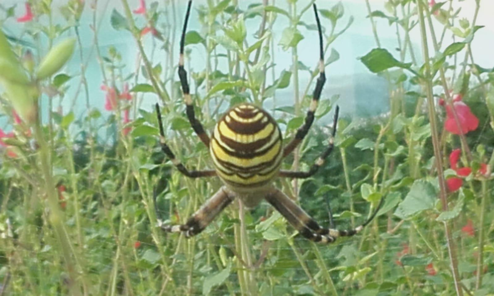 L'animal de pouvoir Araignée